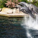 イルカの繁殖を成功させるための課題