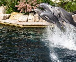イルカ 繁殖 成功