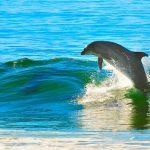 イルカはどれぐらいの種類・数がいる?