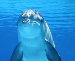 イルカ 生態 自由研究