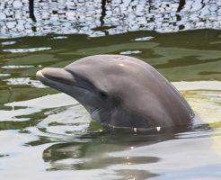 イルカ 赤ちゃん 生態