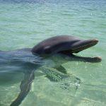 その昔、イルカが地上で暮らしていたって本当?