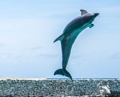 サメ イルカ 強い