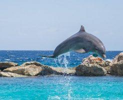 クジラ イルカ 背びれ