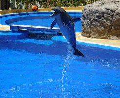 イルカ 皮膚 乾燥