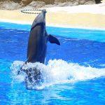 イルカは 水族館 で飼育される限りストレス過多状態?