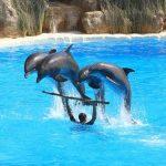 イルカはなぜ人間になつくのか