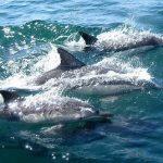 日本海でイルカの群を見ることができる?