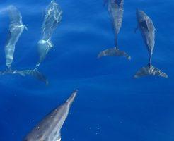イルカ 群れ 狩り