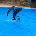イルカは 水族館でどのくらいので寿命をむかえるのか?