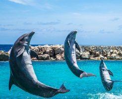 イルカ 尾びれ 進化 力