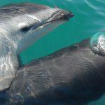 イルカとクジラは哺乳類!?