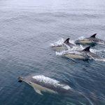 イルカとサメの進化の過程は似ているのか?