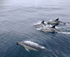 イルカ サメ 進化