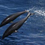 イルカ を 食べる日本が非難される理由