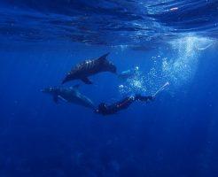 イルカ 泳ぐ 一緒