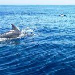 イルカの背びれって泳ぐのに必要?