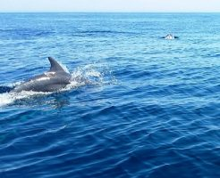 イルカ 背びれ 泳ぐ