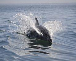 イルカ 水中 呼吸 息