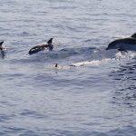 イルカの泳ぐ速さはどれくらい?