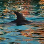 イルカとサメの背びれに違いは?